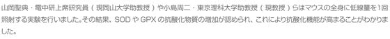 山岡聖典・電中研上席研究員(現岡山大学助教授)や小島周二・東京理科大学助教授(現教授)らはマウスの全身に低線量を1回照射する実験を行いました。その結果、SODやGPXの抗酸化物質の増加が認められ、これにより抗酸化機能が高まることがわかりました。