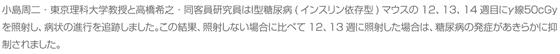 小島周二・東京理科大学教授と高橋希之・同客員研究員はI型糖尿病(インスリン依存型)マウスの12、13、14週目にγ線50cGyを照射し、病状の進行を追跡しました。この結果、照射しない場合に比べて12、13週に照射した場合は、糖尿病の発症があきらかに抑制されました。